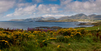 BayFlowers-CountyKerry-Horz